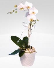 1 dallı orkide saksı çiçeği  Tokat çiçek siparişi vermek
