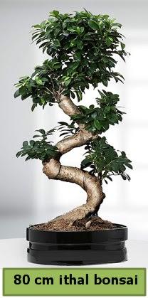 80 cm özel saksıda bonsai bitkisi  Tokat anneler günü çiçek yolla