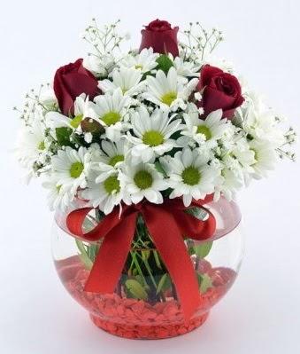 Fanusta 3 Gül ve Papatya  Tokat yurtiçi ve yurtdışı çiçek siparişi