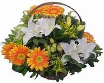 Tokat çiçek siparişi vermek  sepet modeli Gerbera kazablanka sepet