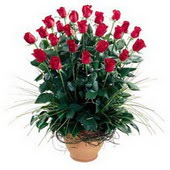 Tokat çiçekçi telefonları  10 adet kirmizi gül cam yada mika vazo