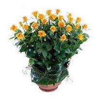 Tokat çiçek gönderme  10 adet sari gül tanzim cam yada mika vazoda çiçek