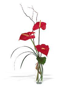 Tokat güvenli kaliteli hızlı çiçek  cam yada mika Vazoda 3 adet  antoryum