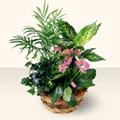 Tokat hediye sevgilime hediye çiçek  5 adet canli çiçek sepette