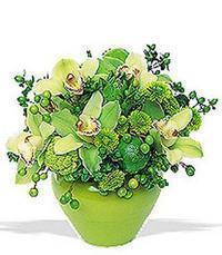 cam yada mika vazoda 5 adet orkide   Tokat çiçek siparişi vermek