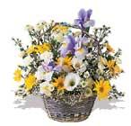 Tokat çiçekçi mağazası  karisik karma kir çiçegi sepeti