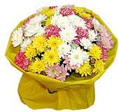 karisik renkte krizantemler  Tokat uluslararası çiçek gönderme