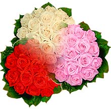 3 renkte gül seven sever   Tokat çiçek online çiçek siparişi