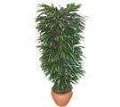 Tokat güvenli kaliteli hızlı çiçek  Özel Mango 1,75 cm yüksekliginde
