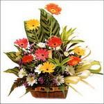sepet içerisinde gerberalar   Tokat çiçek satışı
