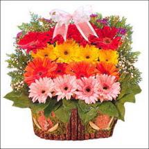 ahsap sepette gerberalar   Tokat kaliteli taze ve ucuz çiçekler
