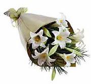 4 adet kazabllanka çiçegi   Tokat cicekciler , cicek siparisi