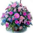 karisik mevsim kir çiçekleri  Tokat cicekciler , cicek siparisi