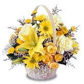 sadece sari çiçek sepeti   Tokat cicekciler , cicek siparisi