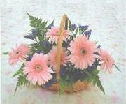 gerbera çiçeklerinde sepet   Tokat uluslararası çiçek gönderme