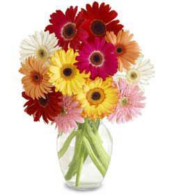 Tokat çiçekçi telefonları  cam vazo içerisinde karisik gerbera çiçekleri