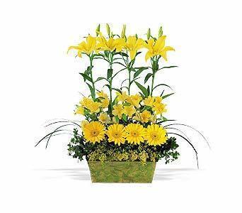 Sarinin sihirli durusu  Tokat çiçek gönderme