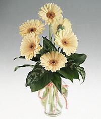 Tokat çiçek gönderme  vazo içerisinde 11 adet gerbera çiçegi