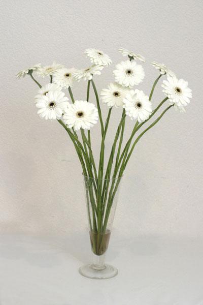 Tokat çiçek siparişi sitesi  cam vazo içerisinde 17 adet sade gerbera