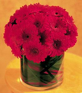 Tokat çiçek servisi , çiçekçi adresleri  23 adet gerbera çiçegi sade ve sik cam içerisinde