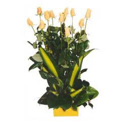 12 adet beyaz gül aranjmani  Tokat internetten çiçek satışı