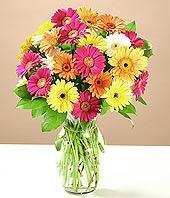Tokat hediye çiçek yolla  17 adet karisik gerbera