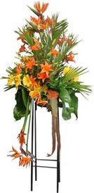 Tokat güvenli kaliteli hızlı çiçek  perförje tanzimi dügün nikah ve açilislara