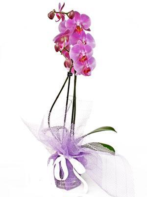 Tokat çiçek , çiçekçi , çiçekçilik  Kaliteli ithal saksida orkide