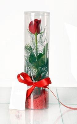 Tokat uluslararası çiçek gönderme  Silindir vazoda tek kirmizi gül
