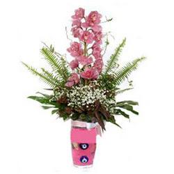 Tokat çiçek mağazası , çiçekçi adresleri  cam yada mika vazo içerisinde tek dal orkide çiçegi
