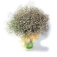 Tokat çiçek siparişi sitesi  cam yada mika vazo içerisinde cipsofilya demeti