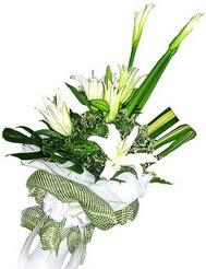 Tokat çiçekçiler  3 dal kazablanka çiçegi ve yesillikler