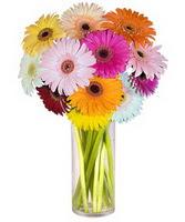 Tokat çiçek yolla , çiçek gönder , çiçekçi   Farkli renklerde 15 adet gerbera çiçegi