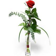 Tokat çiçek satışı  Sana deger veriyorum bir adet gül cam yada mika vazoda