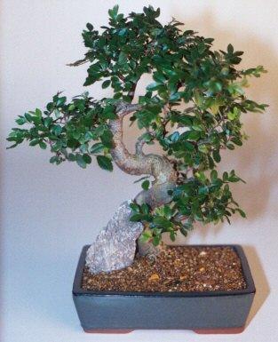 Tokat cicekciler , cicek siparisi  ithal bonsai saksi çiçegi  Tokat güvenli kaliteli hızlı çiçek