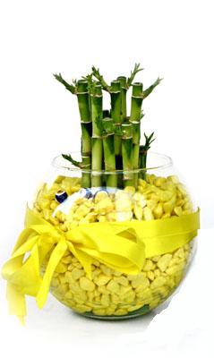 cam fanus içerisinde bambo  Tokat yurtiçi ve yurtdışı çiçek siparişi
