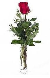Vazo içerisinde 1 adet kirmizi gül  Tokat çiçek gönderme