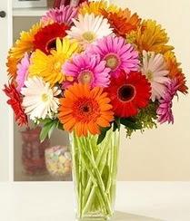 Tokat çiçekçi mağazası  15 adet gerbera çiçek vazosu