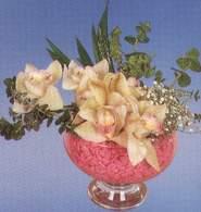Tokat çiçek siparişi sitesi  Dal orkide kalite bir hediye