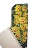 Tokat 14 şubat sevgililer günü çiçek  Kutu içerisine dal cymbidium orkide