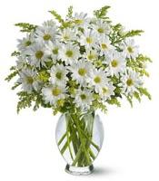 Vazo içerisinde beyaz krizantem çiçekleri  Tokat kaliteli taze ve ucuz çiçekler