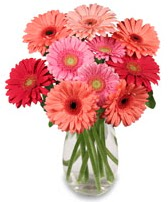 vazo içerisinde 13 adet gerbera çiçeği  Tokat güvenli kaliteli hızlı çiçek