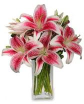 Vazo içerisinde 5 dal kazablanka çiçeği  Tokat çiçek gönderme