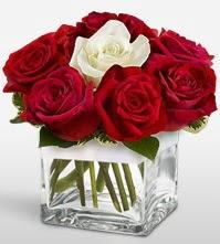 Tek aşkımsın çiçeği 8 kırmızı 1 beyaz gül  Tokat çiçekçi telefonları