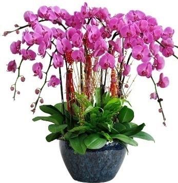 9 dallı mor orkide  Tokat çiçek satışı
