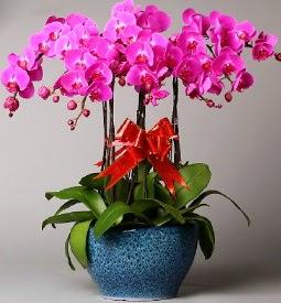 7 dallı mor orkide  Tokat hediye çiçek yolla