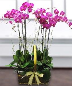 4 dallı mor orkide  Tokat çiçekçiler