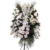 Tokat çiçek yolla  Ferforje beyaz renkli kazablanka