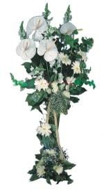 Tokat çiçek siparişi sitesi  antoryumlarin büyüsü özel