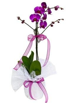 Tek dallı mor orkide  Tokat anneler günü çiçek yolla